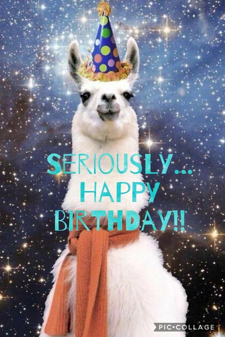 Birthday Quotes happybirthday birthday alpaca